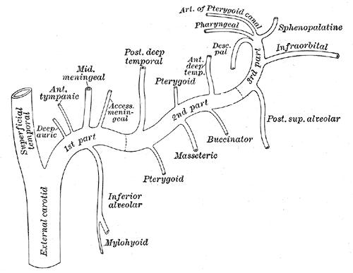 Deep cervix penetration