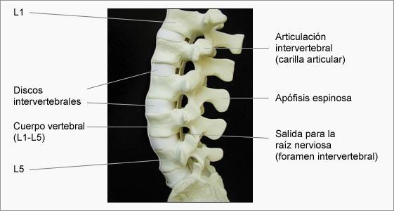 columna_lumbar [Neurocirugía Contemporánea]